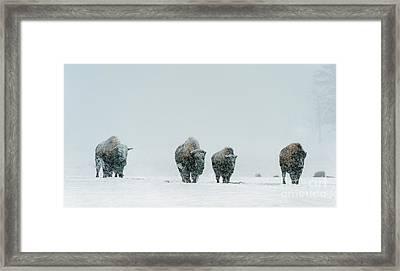 Winter's Burden II Framed Print