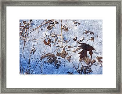 Winter's First Grip Framed Print by Bill Morgenstern