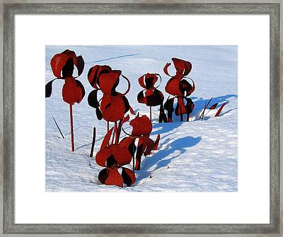Framed Print featuring the photograph Winter's Garden by Randy Rosenberger