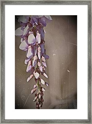 Wisteria Dreams- Fine Art Framed Print