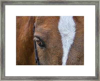 Harry The Wonder Pony Framed Print by JAMART Photography