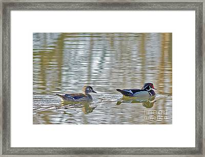 Wood Duck Pair Framed Print by Natural Focal Point Photography