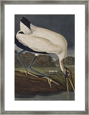 Wood Ibis Framed Print by John James Audubon