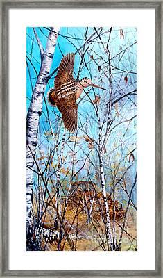 Woodcock Framed Print by Joe Rizzo