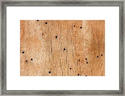 Wooden Texture Framed Print by Boyan Dimitrov
