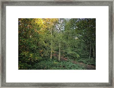 Woodland Framed Print by Martin Newman