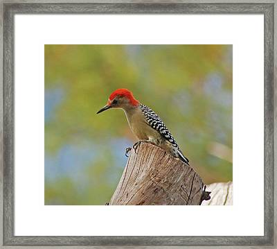 Framed Print featuring the digital art 1- Woodpecker by Joseph Keane
