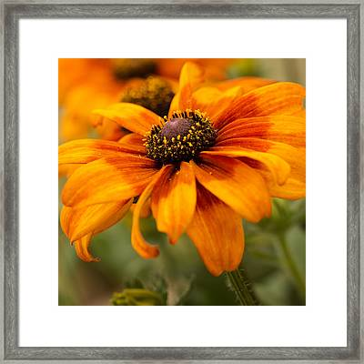 Yellow And Orange Petals Framed Print by Mary Jo Allen