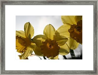 Yellow Beauty Framed Print by Valia Bradshaw