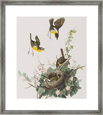 Yellow-breasted Chat Framed Print by John James Audubon
