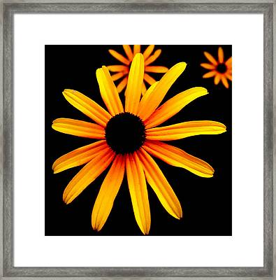 Yellow Flower Framed Print by Robert Scauzillo