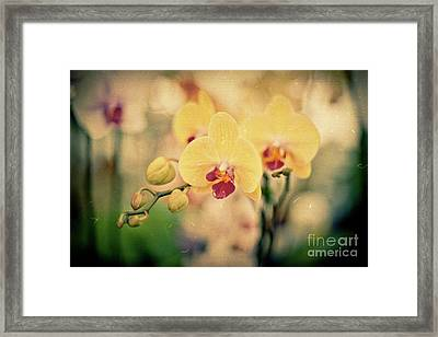 Framed Print featuring the photograph Yellow Orchids by Ana V Ramirez
