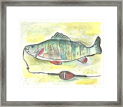 Yellow Perch Framed Print by Matt Gaudian