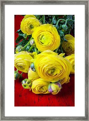 Yellow Ranunculus Framed Print by Garry Gay