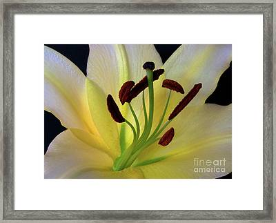 Yellow Framed Print by Robert Pilkington