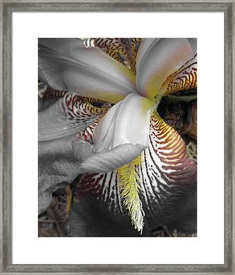 Yellow Touches Framed Print by Michele Caporaso