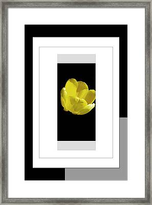Yellow Tulip 1 Of 3 Framed Print