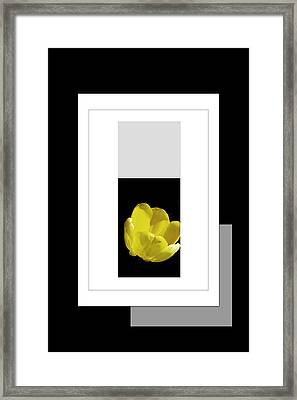 Yellow Tulip 2 Of 3 Framed Print by Tina M Wenger