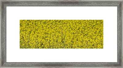 Framed Print featuring the photograph Yellow by Wanda Krack