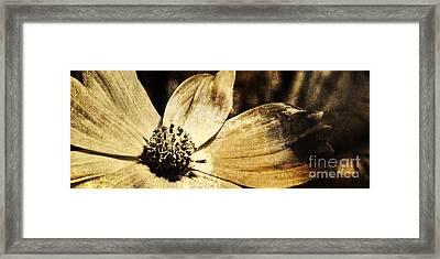 Yesterday's Flower Framed Print