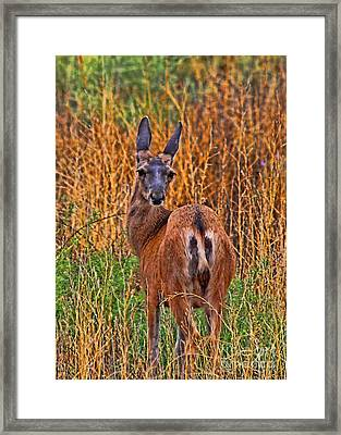 You Looking At Me Framed Print by Tommy Anderson