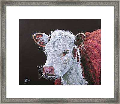 Young Bull Framed Print by Stan Hamilton