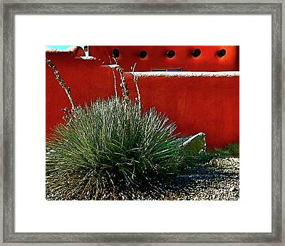 Yucca And Adobe Framed Print