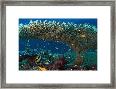 Zanzibar Island Sea  Coral Reef Vegitation Bio Diversity Of Exotic Fish Plants And  Organisims Zanzi Framed Print by Navin Joshi