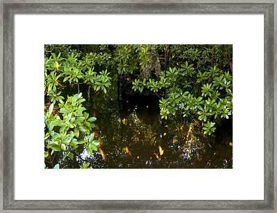 Zanzibar Island Swamp Marshes Wetlands Vegitation Trees Fish Water Crabs Eggs Habitat  Framed Print by Navin Joshi