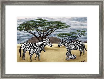 Zebra African Outback  Framed Print