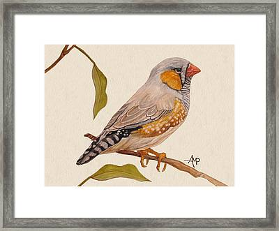 Zebra Finch Framed Print by Angeles M Pomata