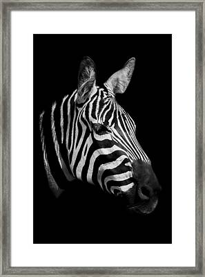 Zebra Framed Print by Paul Neville