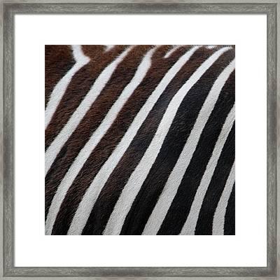 Zebra Wall Design 2 Framed Print