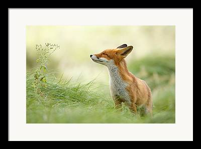 Happy Animal Framed Prints