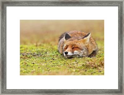 Zen Fox Series - Happy Fox Is Happy II Framed Print by Roeselien Raimond