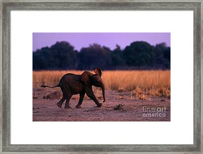Zimbabwe_63-15 Framed Print by Craig Lovell