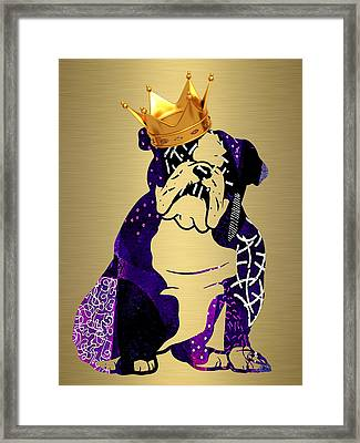 English Bulldog Collection Framed Print by Marvin Blaine