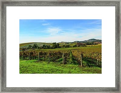 Napa Valley California Vineyard Framed Print by Brandon Bourdages
