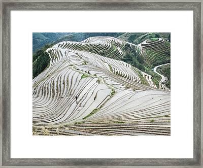 Terrace Fields Scenery In Spring Framed Print