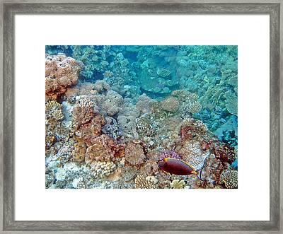 Underwater World. Framed Print by Andy Za