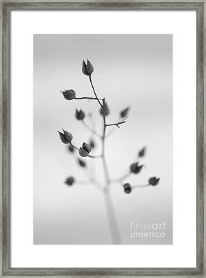 Untitled Framed Print by Gabriela Insuratelu
