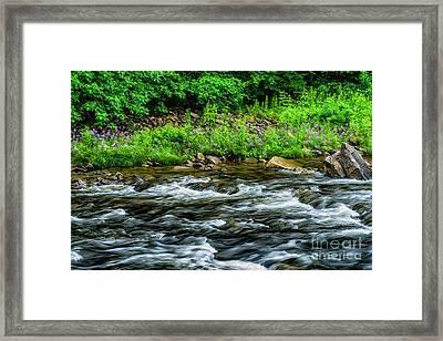 Williams River Summer Framed Print by Thomas R Fletcher