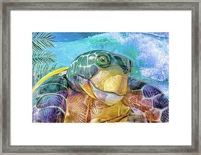 10730 Mr Tortoise Framed Print by Pamela Williams