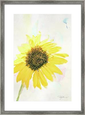 10845 Sunflower Framed Print