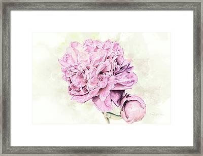 10861 Spring Peony Framed Print by Pamela Williams