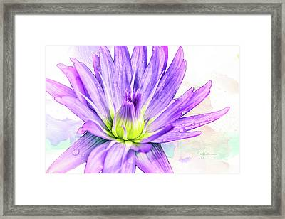 10889 Purple Lily Framed Print