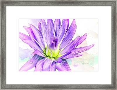 10889 Purple Lily Framed Print
