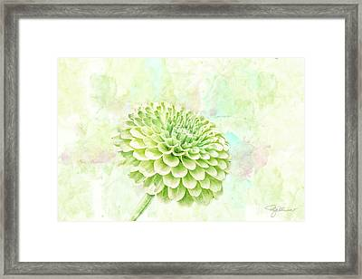 10891 Green Chrysanthemum Framed Print