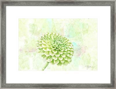10891 Green Chrysanthemum Framed Print
