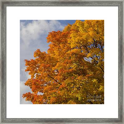 Fall In Door County Framed Print